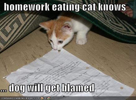 File:Lolcat Homework.jpg