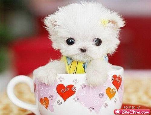 File:More-cute-animals-15.jpg