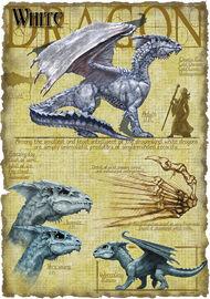White dragon anatomy - Richard Sardinha