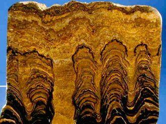Proterozoic Stromatolites1