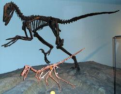 Buitreraptor-Deinonychus