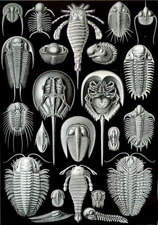 Haeckel Aspidonia