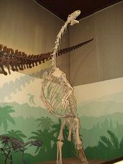 Scheletro dinosauro - Museo di storia naturale, Milano