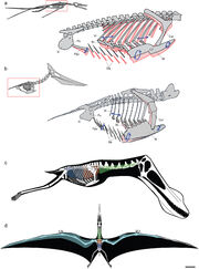 Pterosaur pulmonary air sac system