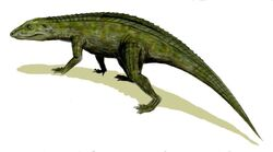 Protosuchus BW