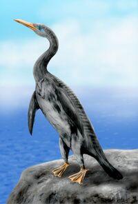 Copepteryx BW