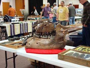 Tallahassee Native American Artifact and Fossil Show1