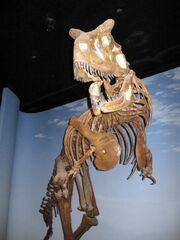 Carnotaurus skeleton