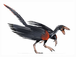 Archaeopteryx BW