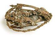 Mei long fossil skeleton AMNH