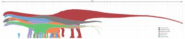 Longest dinosaurs1