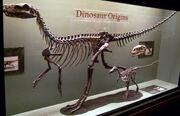 Herrerasaurusskeleton
