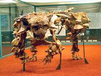 Saichania skeleton