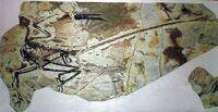 Microraptor gui (dinos)