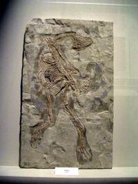 Caudipteryx zoui 2