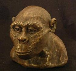 Austrolopithecus africanus