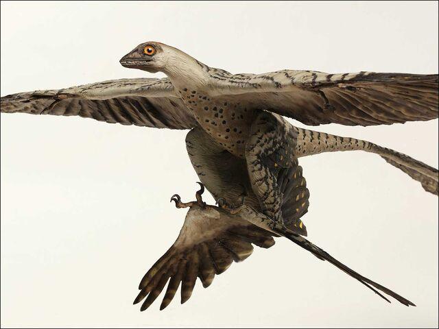 File:Microraptor (2).jpg