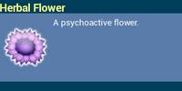 Herbal Flower