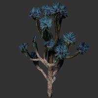 File:Joshua Tree.png
