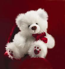 File:Teddy (8).jpg