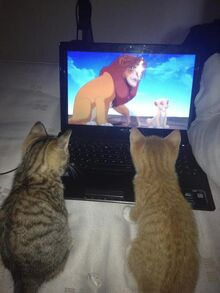 Cats-watching-the-Lion-King