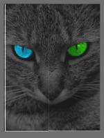 Jayflight the kitty