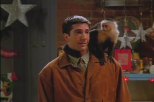 File:The One With The Monkey.jpg