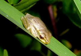 File:Froggo my man!.jpg