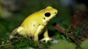 File:Frogg.jpg