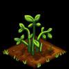 Peanuts green