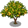 Apricot Tree Fruit-icon