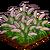 Fountain Grass-icon