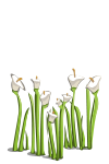 File:Wildflowers-icon.png