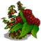 Raspberry Bush-icon