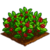 Winterberry-icon