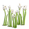 File:Wildflowers100-icon.png