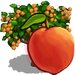 Peach Tree-icon