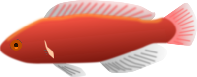 File:Illustration+of+a+red+fish.png