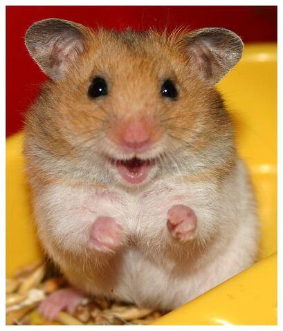 File:Hamster-1.jpg