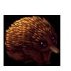 1564-brown-echidna