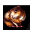 630-tortie-guinea-pig