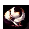 629-dutch-guinea-pig