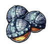 554-hairy-radish-seed