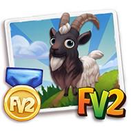 Prized Bagot Goat