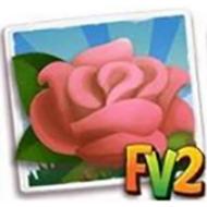 Pink Rose Crop