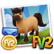Prized Buckskin Mini Horse