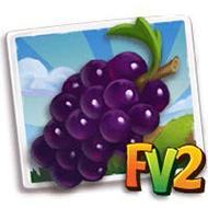 Pinot Noir Grape Crop
