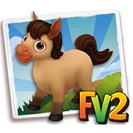 Baby Buckskin Mini Horse