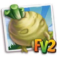 Celeriac Crop