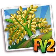 Upland Rice Crop